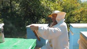 Pszczelarka trzyma honeycomb pszczoła styl życia pełno Pszczelarka Sprawdza Honeycomb ramę Przy pasieką Beekeeping pojęcie zbiory wideo