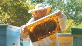 Pszczelarka trzyma honeycomb pszczoły pełno Pszczelarka Sprawdza Honeycomb ramę Przy pasieką beekeeping pojęcia styl życia zbiory wideo