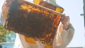 Pszczelarka trzyma honeycomb pszczoły pełno Pszczelarka Sprawdza Honeycomb ramę Przy pasieką Beekeeping pojęcie wolny zdjęcie wideo