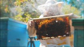 Pszczelarka trzyma honeycomb pszczoły pełno Pszczelarka Sprawdza Honeycomb ramę Przy pasieką Beekeeping pojęcie wolny zbiory wideo