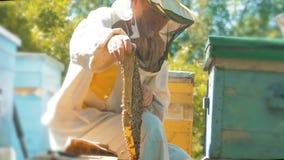 Pszczelarka trzyma honeycomb pszczoły pełno Pszczelarka Sprawdza Honeycomb ramę Przy pasieką Beekeeping pojęcie wolny zbiory