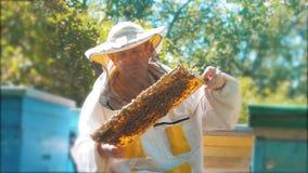 Pszczelarka trzyma honeycomb pszczoły pełno Pszczelarka Sprawdza Honeycomb ramę Przy pasieką beekeeping stylu życia pojęcie zbiory wideo