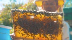 Pszczelarka trzyma honeycomb pszczoły pełno Pszczelarka sprawdza honeycomb ramę przy styl życia pasieką Beekeeping pojęcie zbiory wideo