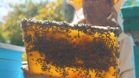 Pszczelarka trzyma honeycomb pszczoły pełno Pszczelarka sprawdza honeycomb ramowego styl życia przy pasieką Beekeeping pojęcie zbiory