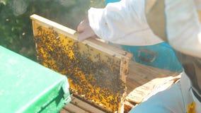 Pszczelarka trzyma honeycomb styl życia pszczoły pełno Pszczelarka Sprawdza Honeycomb ramę Przy pasieką Beekeeping pojęcie zbiory