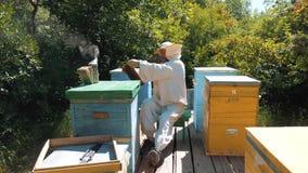 Pszczelarka trzyma honeycomb styl życia pszczoły pełno Pszczelarka Sprawdza Honeycomb ramę Przy pasieką Beekeeping pojęcie zdjęcie wideo