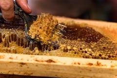 Pszczelarka usuwa wosków dekle od honeycombs ram obraz stock
