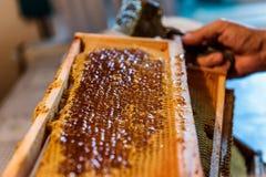 Pszczelarka usuwa wosków dekle od honeycombs ram obraz royalty free