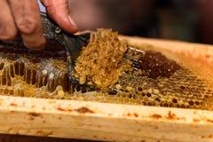 Pszczelarka usuwa wosków dekle od honeycombs ram obrazy stock