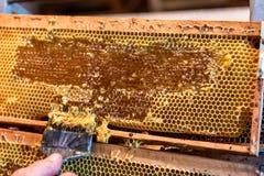 Pszczelarka usuwa wosków dekle od honeycombs ram fotografia stock