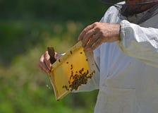 Pszczelarka z miód gręplą Fotografia Stock