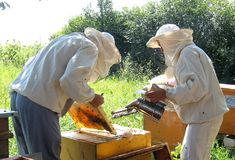 pszczelarki Obrazy Royalty Free