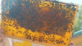 Pszczelarki mienia styl życia honeycomb pełno pszczoły Pszczelarka Sprawdza Honeycomb ramę Przy pasieką Beekeeping pojęcie zdjęcie wideo