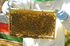 pszczelarki praca Zdjęcia Royalty Free