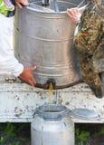 Pszczelarki przy pracą Zdjęcie Royalty Free