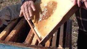 Pszczelarki sprawdza honeycombs zbiory wideo
