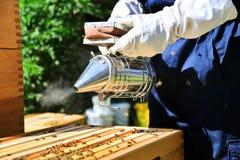 Pszczelarki używają palacza Specjalny narzędzie który używa dla spokojnych pszczół zestrzela Fotografia Stock