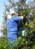 pszczelarze pracy Obraz Stock