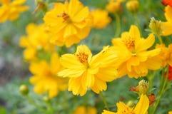 Pszczoła fotografia stock