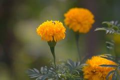 Pszczoła i żółty kwiat Fotografia Stock