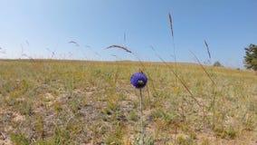 Pszczoła i biedronka na kwiacie w polu zbiory
