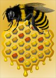 Pszczoła i honeycomb royalty ilustracja