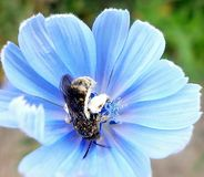 Pszczoła i kwiat obrazy stock