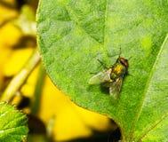 Pszczoła i liść Obraz Stock