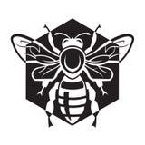 Pszczoła i miód Fotografia Royalty Free