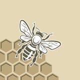 Pszczoła i miód Obrazy Royalty Free