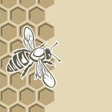 Pszczoła i miód Zdjęcia Royalty Free