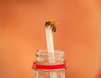 Pszczoła Kocha sodę Zdjęcia Royalty Free