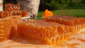 Pszczoła lata nad honeycombs na drewnianym stole zbiory wideo