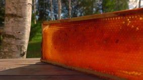 Pszczoła lata wokoło ramy z honeycombs na stole zbiory wideo