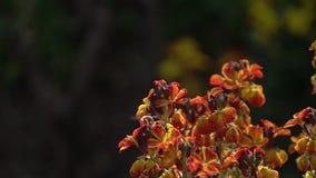 Pszczoła na kwiacie zdjęcie wideo