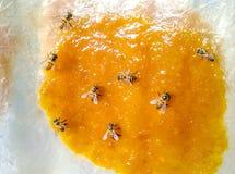 Pszczoła na mangowym dżemu Zdjęcie Stock
