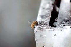 Pszczoła na pudełku Zdjęcia Royalty Free