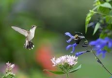 Pszczoła Ostrożna jest Najlepszy strategią obraz royalty free