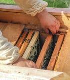 Pszczoła rój i honeycomb zbliżenie Zdjęcia Stock