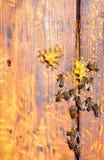 Pszczoła rój z pszczołami na nim zdjęcia royalty free