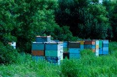 Pszczoła roje zdjęcie royalty free