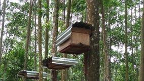 Pszczoła roje w lesie zbiory wideo