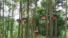 Pszczoła roje w lesie zbiory