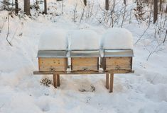 Pszczoła roje w zimie zdjęcia royalty free