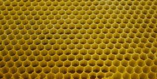 Pszczoła roju honeycomb komórki przyrodni pełny miód Fotografia Stock