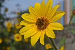 pszczoła trochę Zdjęcie Stock