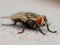 pszczoła występować samodzielnie Fotografia Royalty Free