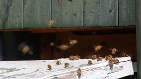 pszczoła wyszczególniający miód odizolowywający macro brogował bardzo biel zbiory