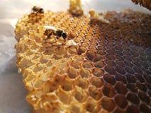 Pszczoły życie fotografia royalty free