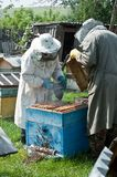 pszczoły Fotografia Royalty Free